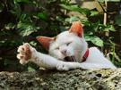 あくび猫.png